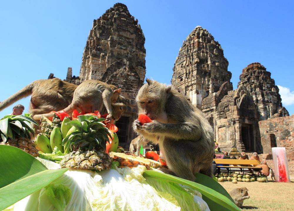 In Thailand people organize a feast for monkeys for a religious holiday on November 25
