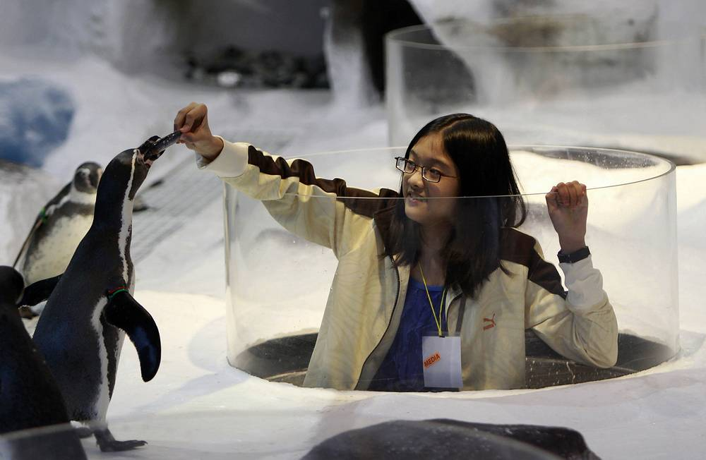 Photo: A girl feeds a Humboldt penguin at Manila Ocean Park