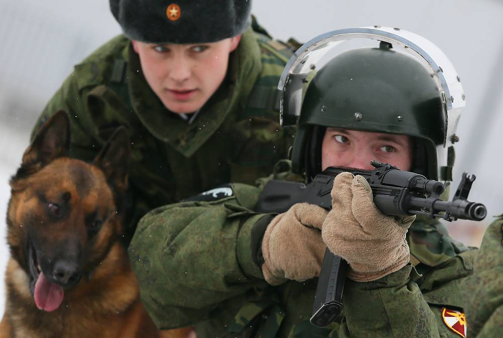 Dogs are trained not to be afraid of gunfire and explosions