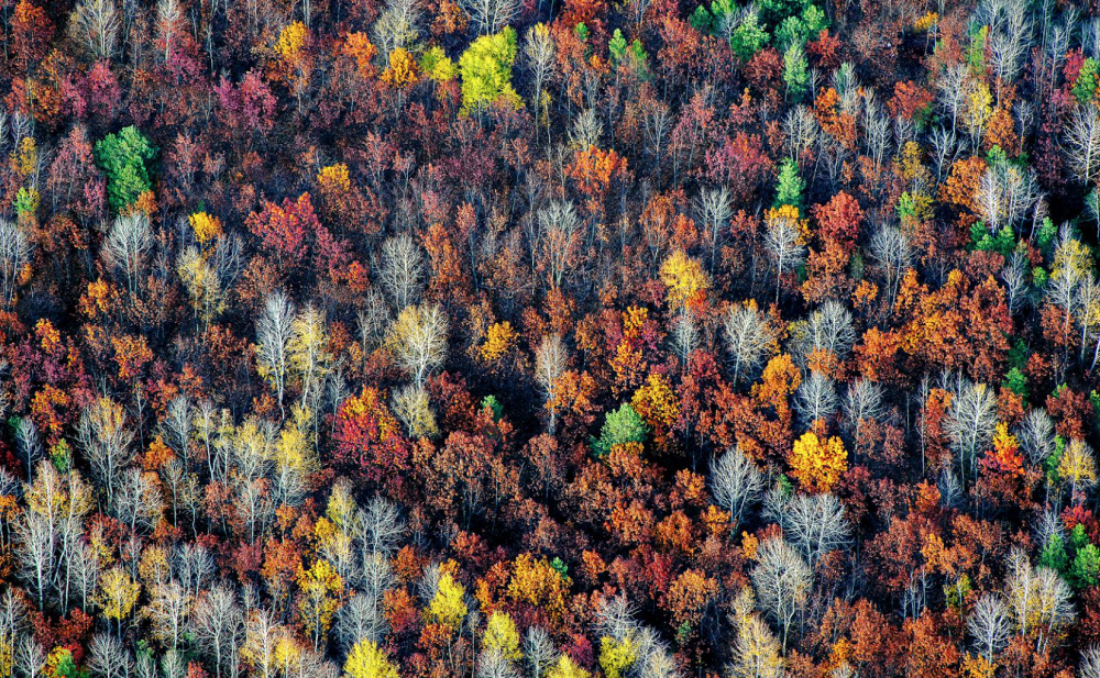 Geometry of the fall, by Konstantin Tolokonnikov (Voronezh). Photo: Voronezh region