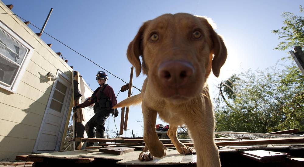Cadaver dog Chance searching for people following the tornadoes in Tuscaloosa, USA
