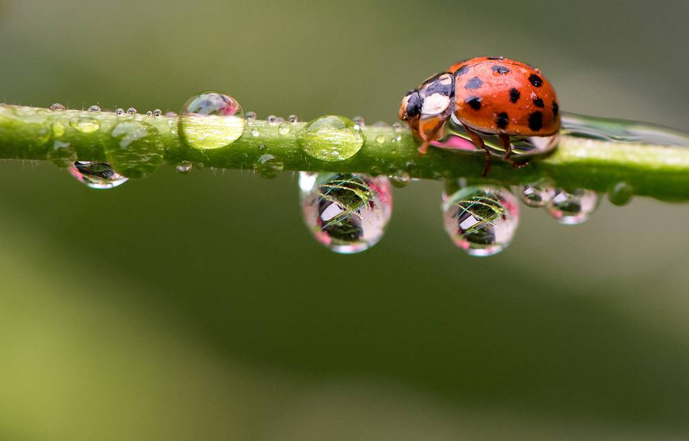 "It is said that if you notice ladybugs looking for shelter, then cold weather is on the way. On the other hand, ""when they swarm, expect a day that's warm"""