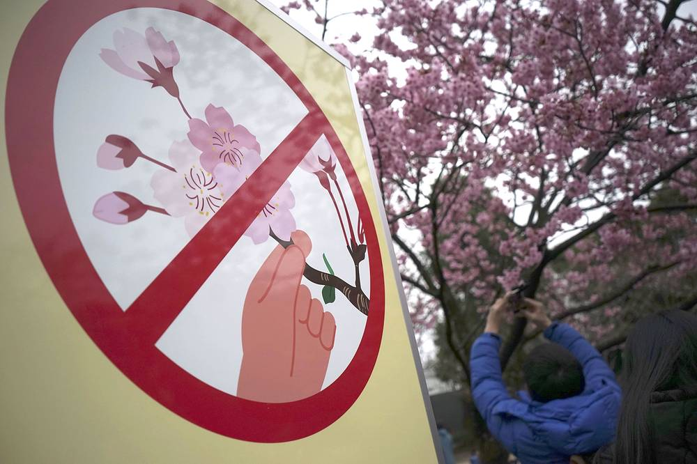 "A ""Hands off blooming cherry"" sign at Ueno Park in Tokyo, Japan"