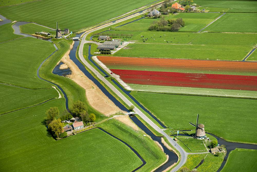 An aerial view of a typical Dutch scene with mills, cows in the field, and a field of tulips in bloom, in Opdam, the Netherlands, April 13