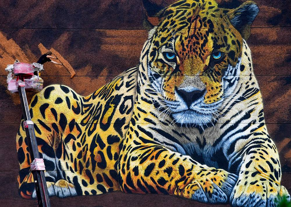 - AUGUST 8, 2017: A graffiti image of Amur leopard painted by a V-ROX festival participant, South African street artist Sonny as part of his To the Bones art project to raise funds and awareness of endangered wildlife species.