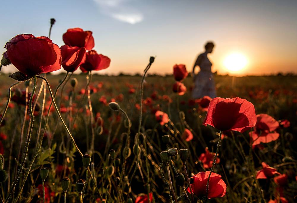 Poppies are seen in the vicinity of the village of Pozharskoe, Simferopol district, May 31