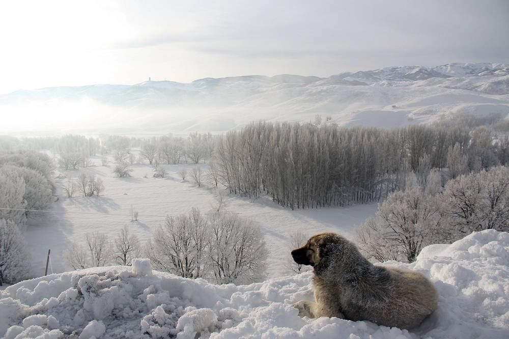 A dog is seen at a snow covered path during cold weather at Ovacik district of Tunceli, Turkey, February 6