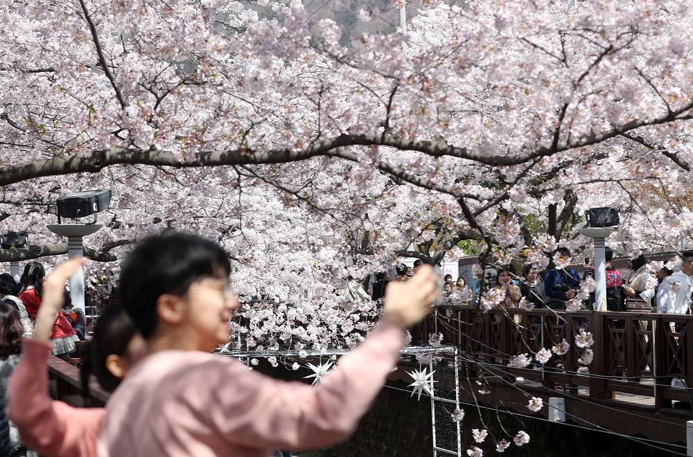 Tourists taking photographs at a creek in the southeastern city of Changwon, South Korea