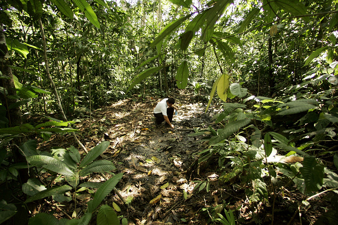 Amazon rainforest is a moist broadleaf forest that covers most of the Amazon Basin of South America. This region includes territory belonging to nine nations