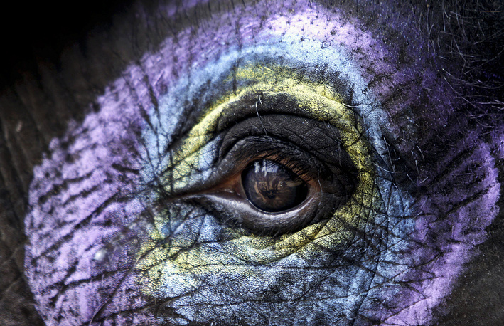 For elephants, the median life span is 40-60 years, but under favorable conditions, the animals can live longer