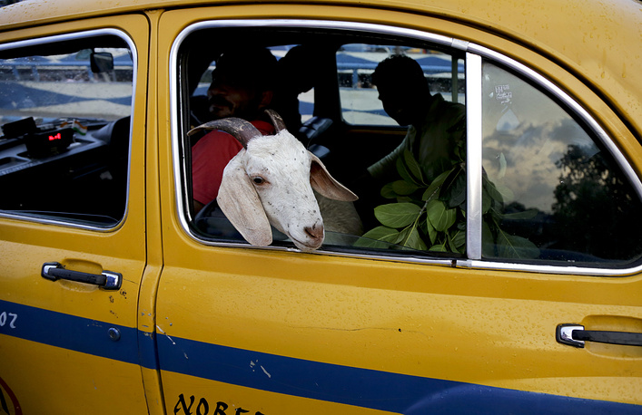 A goat is transported in a yellow cab near a live stock market ahead of the Muslim festival Eid al-Adha in Kolkata, India, September 11