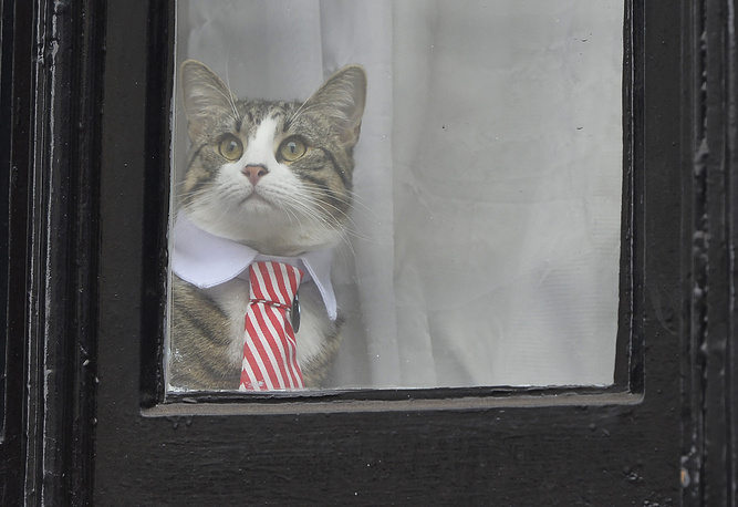 Julian Assange's cat wearing a tie looks out of the window of the Ecuadorian Embassy in London, Britain, November 14