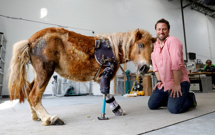 Derrick Campana kneels beside Angel Marie, a three legged mini horse who wears a prosthetic leg made by Campana, at Animal Ortho Care in Sterling, US, March 27