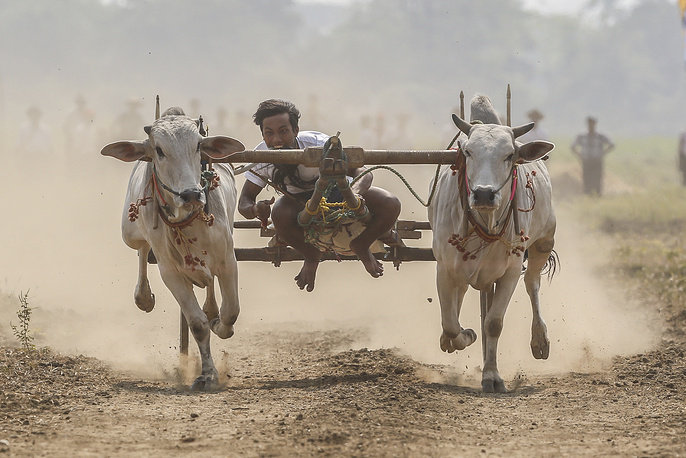 A man rides a bullock cart during the traditional racing festival on the outskirts of Naypyitaw, Myanmar, April 1