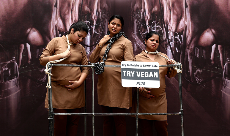 Pregnant activists of the PeTA animal rights organisation have themselves restrained with chains and ropes in a mock stall during a protest against the cruelty of the dairy industry in Bangalore, India, May 12