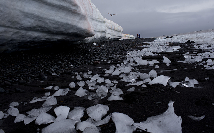 Water is eating away at the Antarctic ice, melting it where it hits the oceans. Photo: Pieces of thawing ice scattered along the beachshore at Punta Hanna, Livingston Island, South Shetland Island archipelago, Antarctica, 2015
