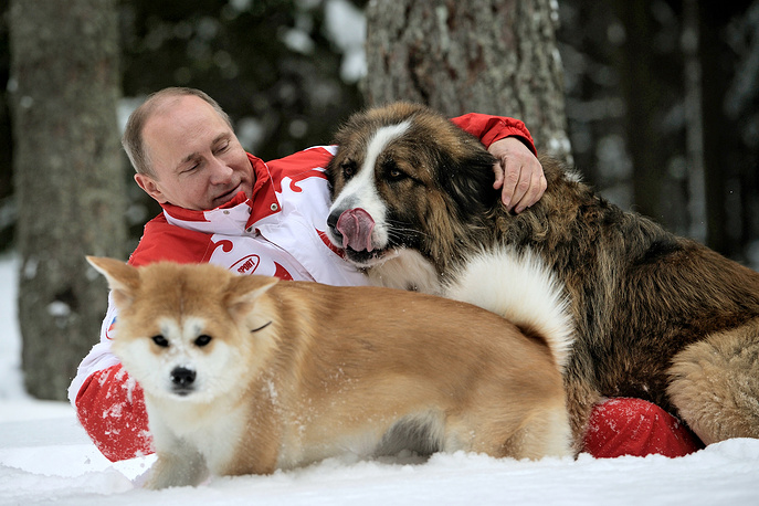Russia's president Vladimir Putin taking his dogs, akita Yume and Bulgarian shepherd Buffy, for a walk in a snowy forest outside Moscow, 2013