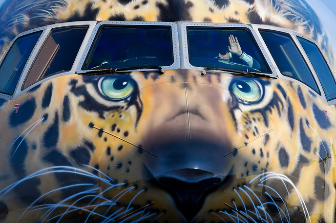 Rossiya Airlines Boeing 777-300 with a face of the endangered Amur leopard painted on its nose cone arrives at Vladivostok International Airport, March 3
