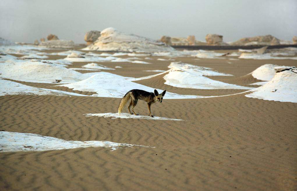 White desert in Egypt AP Photo/Manoocher Deghati