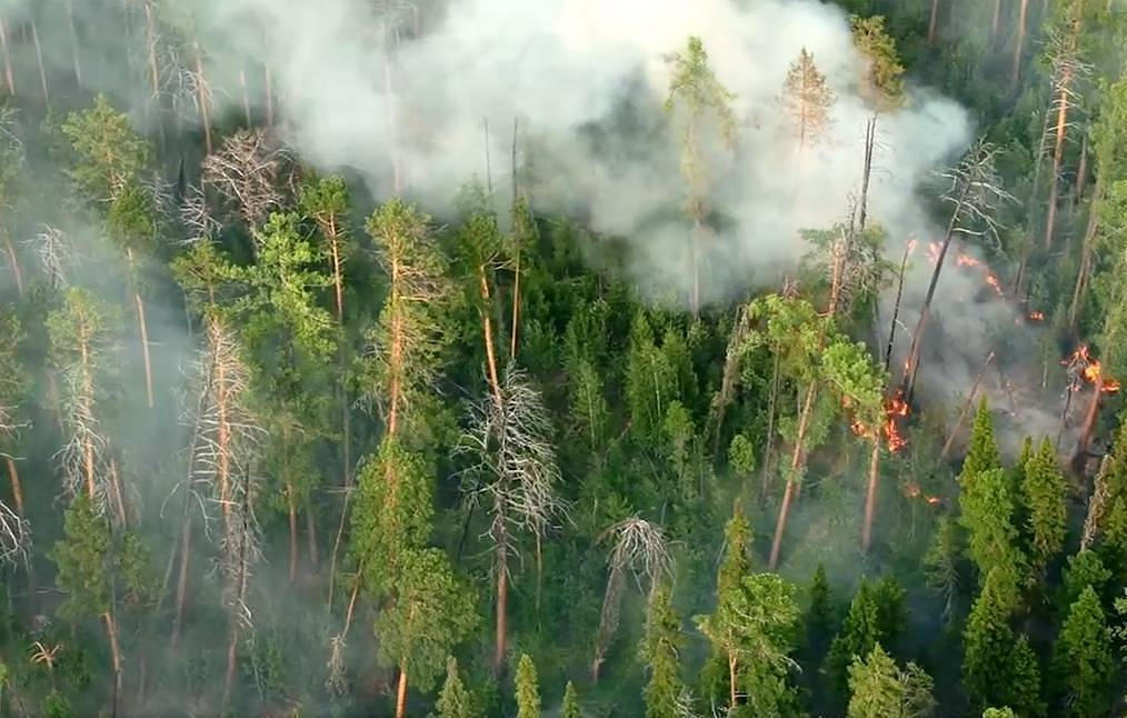 Still from a video/Aerial Forest Protection Service/TASS