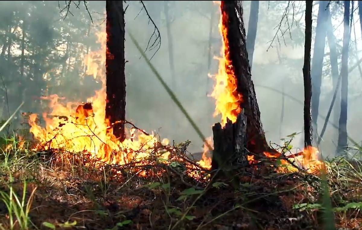 High wildfire risk persists in Russian Siberia, Far East — weather authority