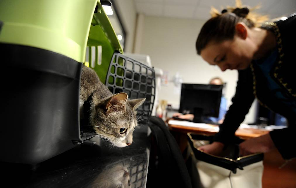 Moscow airport launches inquiry after two cats die due to improper handling of luggage