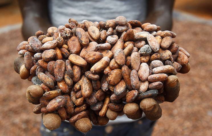 Cocoa beans at a farm in South West Ivory Coast